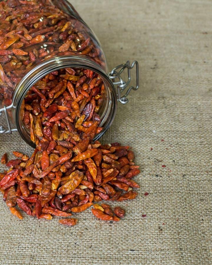 Cayenne chilli pepper stock image
