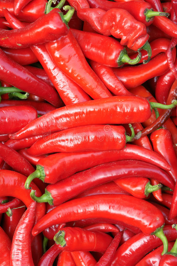 Cayenne pepper. The background of red cayenne pepper royalty free stock photo