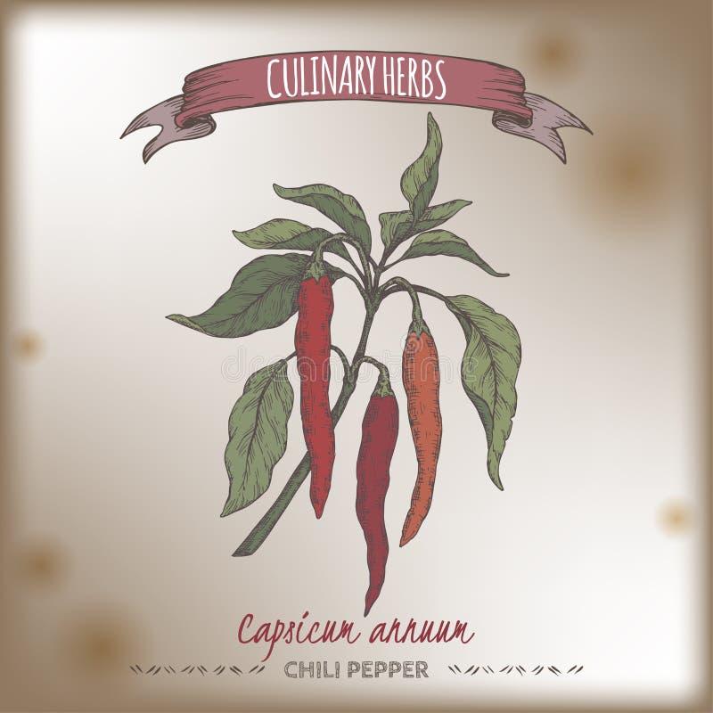 Cayenne pieprzu aka gorący chili, Capsicum koloru annuum ręka rysujący nakreślenie ilustracja wektor