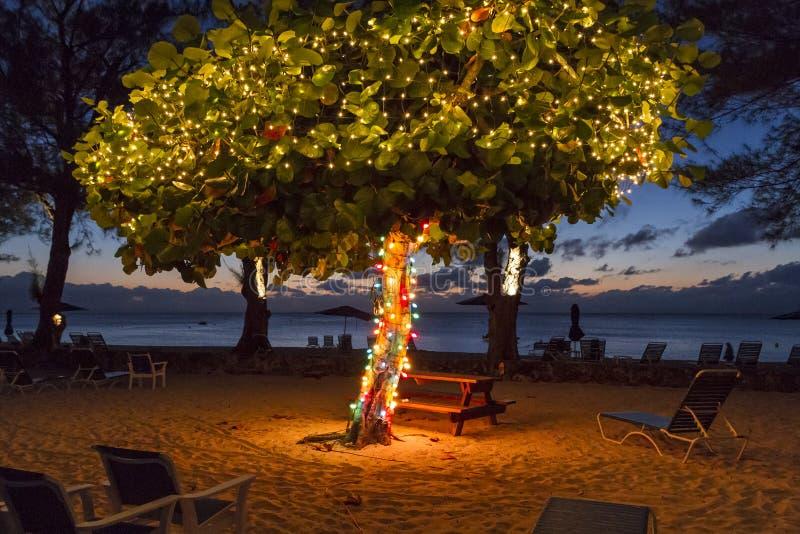 Cayman Beach Christmas Tree royalty free stock image
