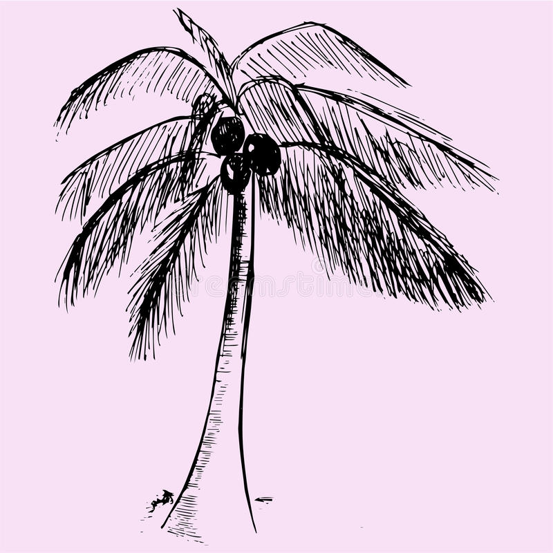 cayo椰子古巴guillermo结构树 向量例证