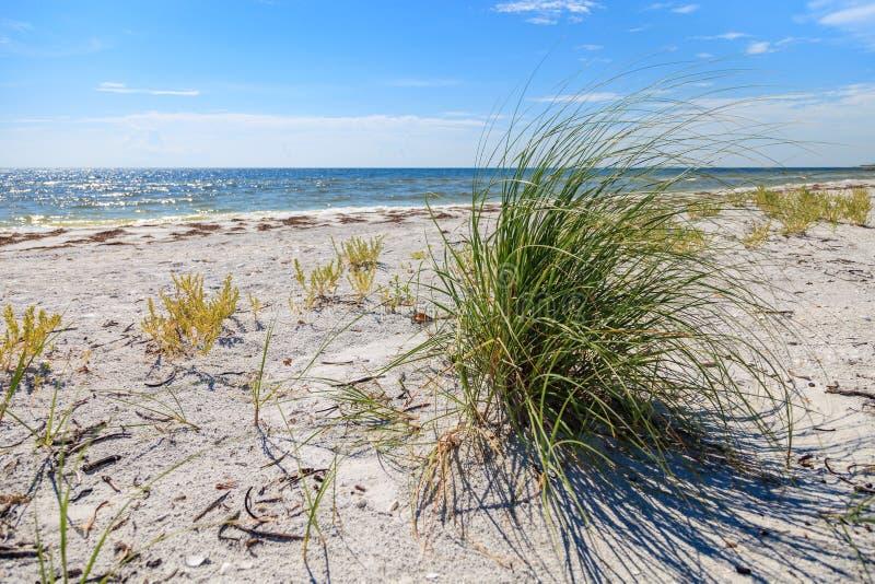 Cayo Costa plaży Seagrass fotografia stock
