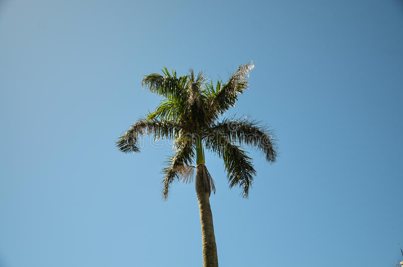 cayo kokosowy Cuba Guillermo drzewo obraz stock