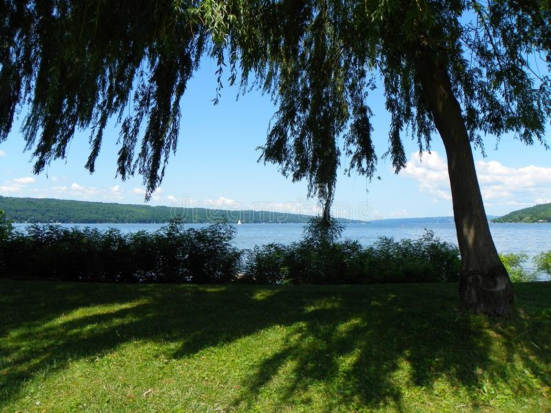 Cayuga Jeziorny widok od Wierzbowego Drzewnego baldachimu w Stewart parku w Itha obraz royalty free