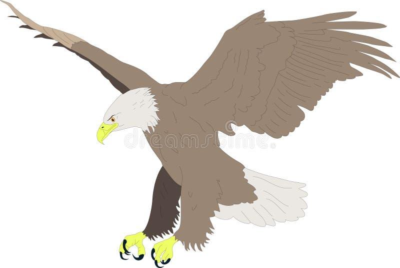Fantástico Anatomía águila Calva Adorno - Anatomía de Las ...