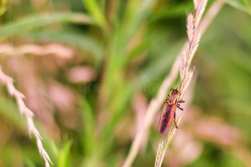 Cazador del insecto fotos de archivo