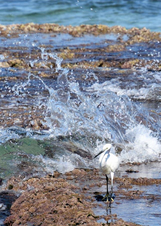 Cazas valientes del pájaro de la grúa en la costa foto de archivo libre de regalías