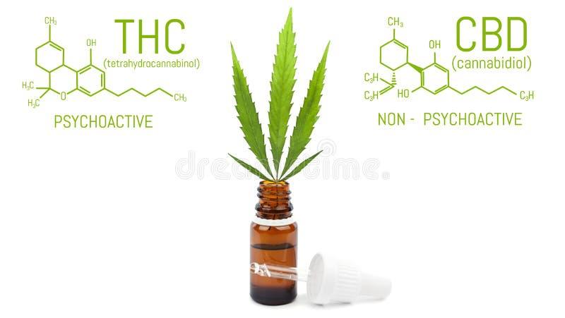 CBD与吸管,在瓶的绿色大麻叶子的大麻油 大麻产品隔绝了白色背景 医疗概念 免版税库存照片