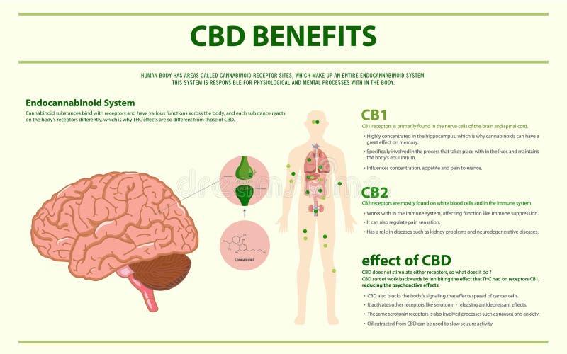 CBD benefits human horizontal infographic stock illustration