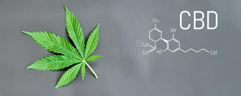CBD cannabis formula. CBD oil cannabis extract, medical hemp concept.  vector illustration