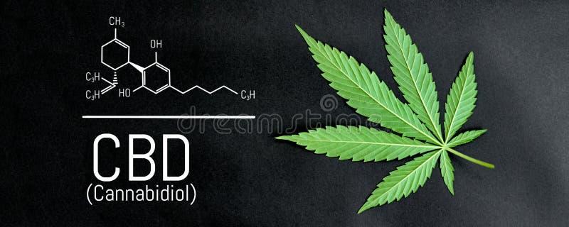 CBD cannabis formula. CBD oil cannabis extract, medical hemp concept.  stock illustration