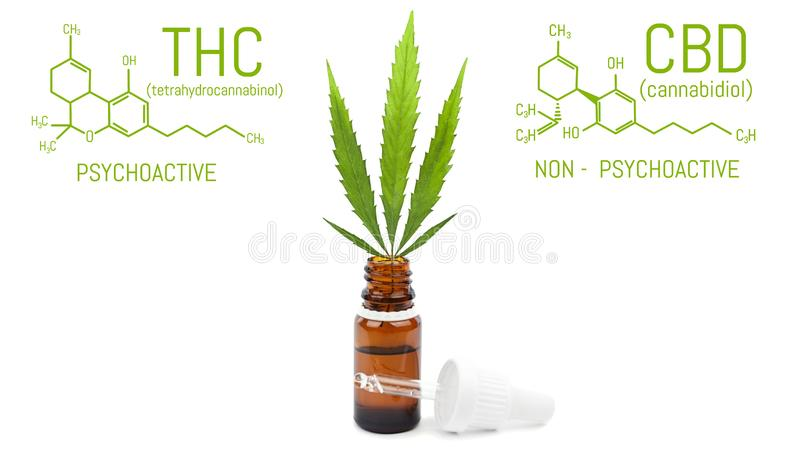 CBD cannabis oil with dropper, green hemp leaf in bottle. Marijuana products isolated white background. Medical concept royalty free stock photos