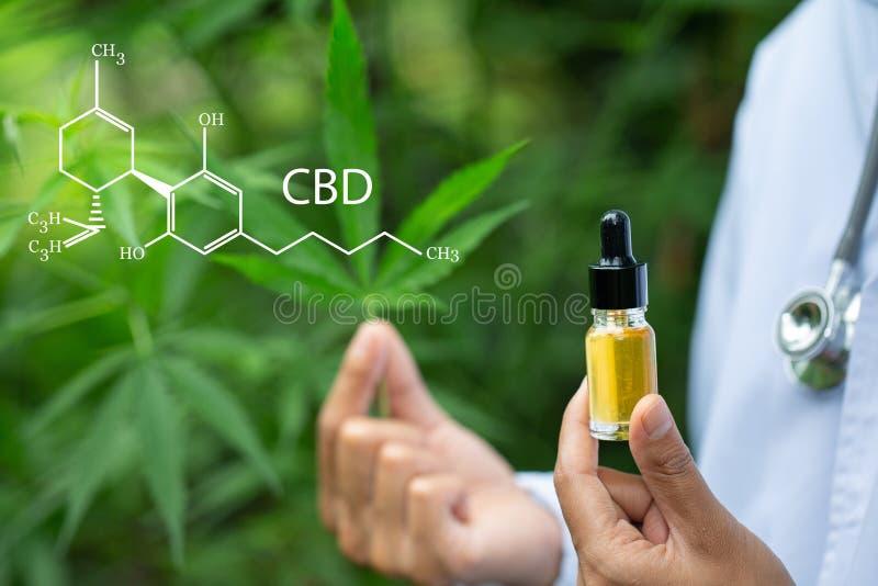 CBD-Hennepolie, Arts die een fles hennepolie houden, Medische marihuanaproducten met inbegrip van cannabisblad, cbd en knoeiboelo royalty-vrije stock afbeelding