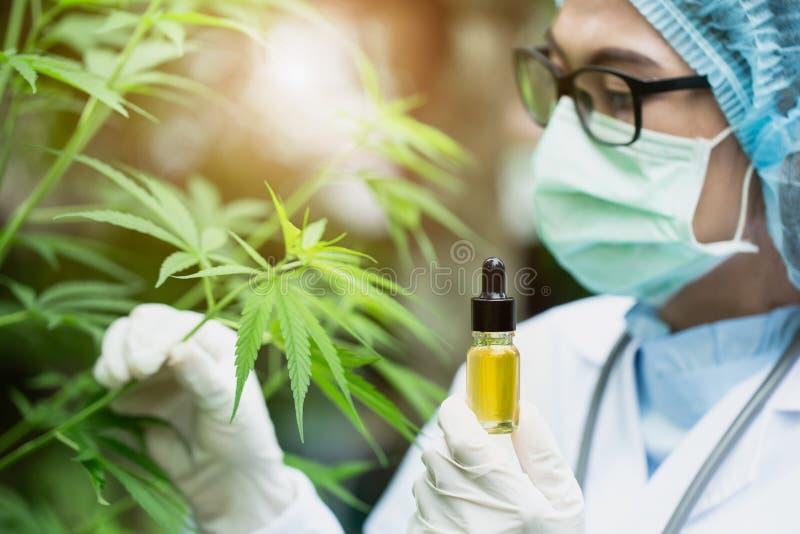 CBD-Hennepolie, Arts die een fles hennepolie houdt, Medische marihuanaproducten met inbegrip van cannabisblad, cbd en knoeiboelol stock afbeeldingen