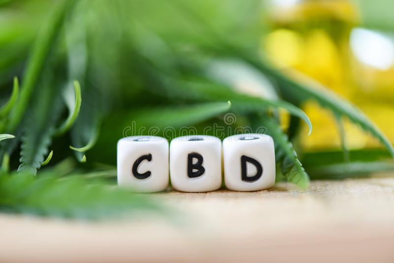CBD oil extract from cannabis leaf Marijuana leaves for Hemp medical healthcare natural royalty free stock photography