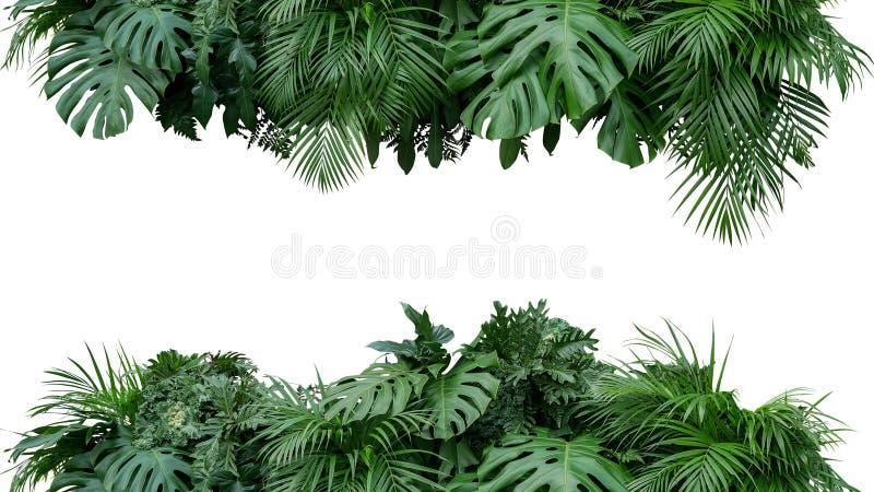 CCB tropical da natureza do arranjo floral do arbusto da planta da folha das folhas foto de stock