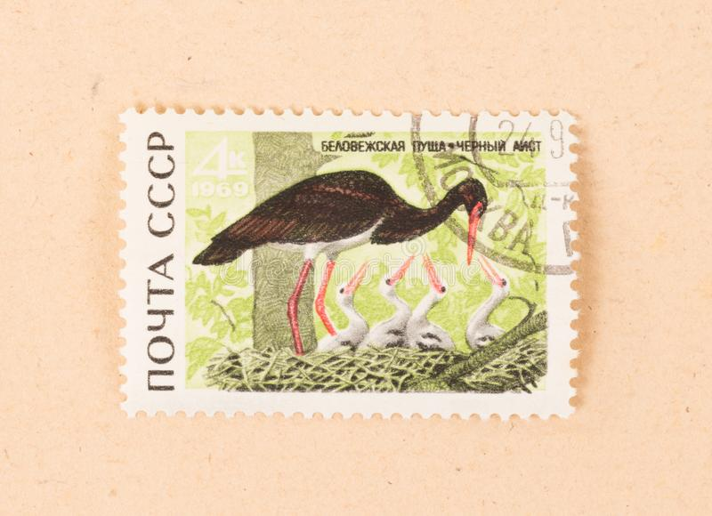 A stamp printed in the CCCP shows a black stork, circa 1970 royalty free stock image