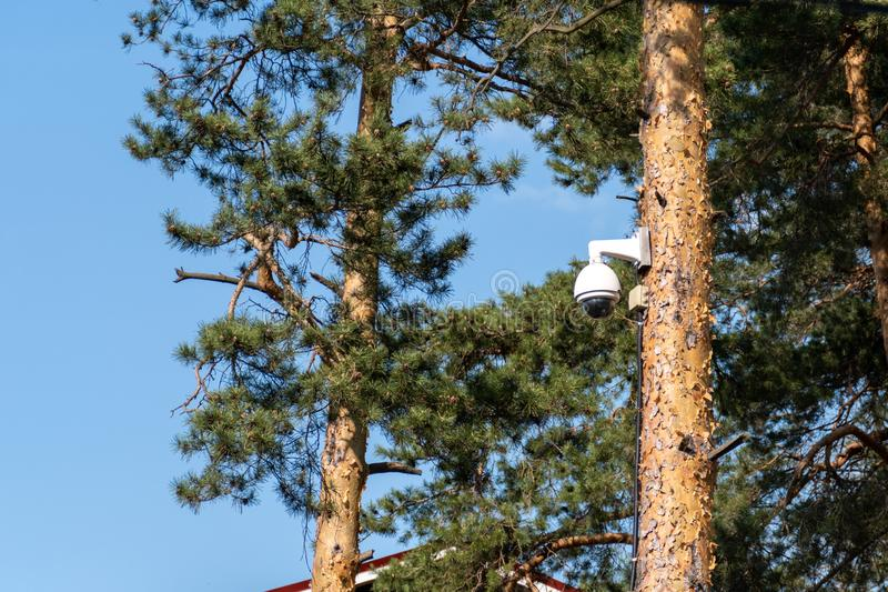 CCTV security camera is mounted on a tree trunk in the forest. Concept of total control and constant surveillance.  royalty free stock images