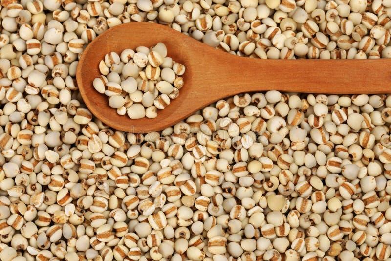 Cebada de perla china foto de archivo libre de regalías