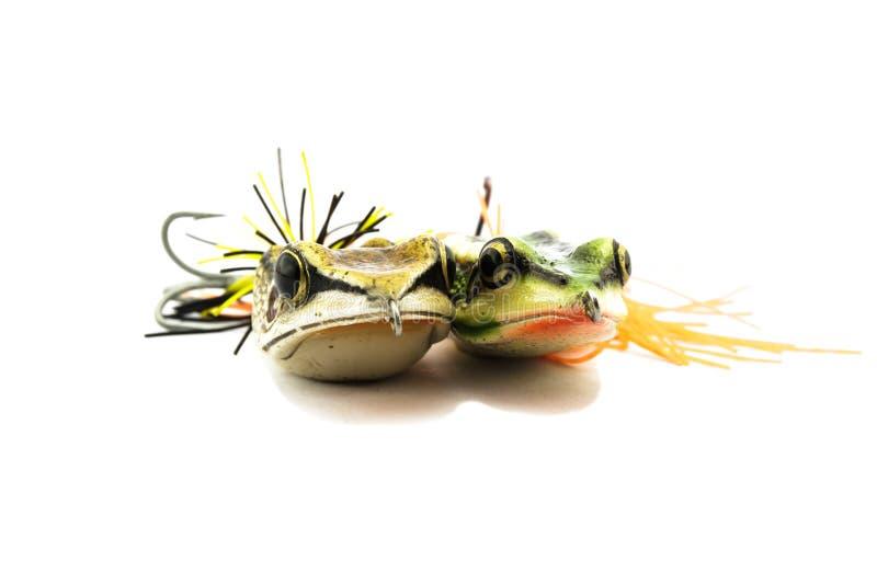 Cebo de los pescados foto de archivo libre de regalías