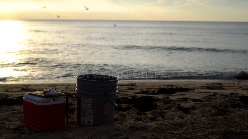 Cebo para los pescados fotos de archivo libres de regalías