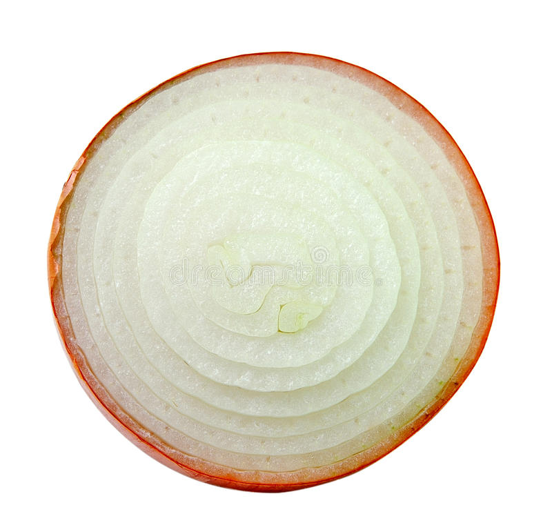 Cebola cortada no fundo branco imagem de stock
