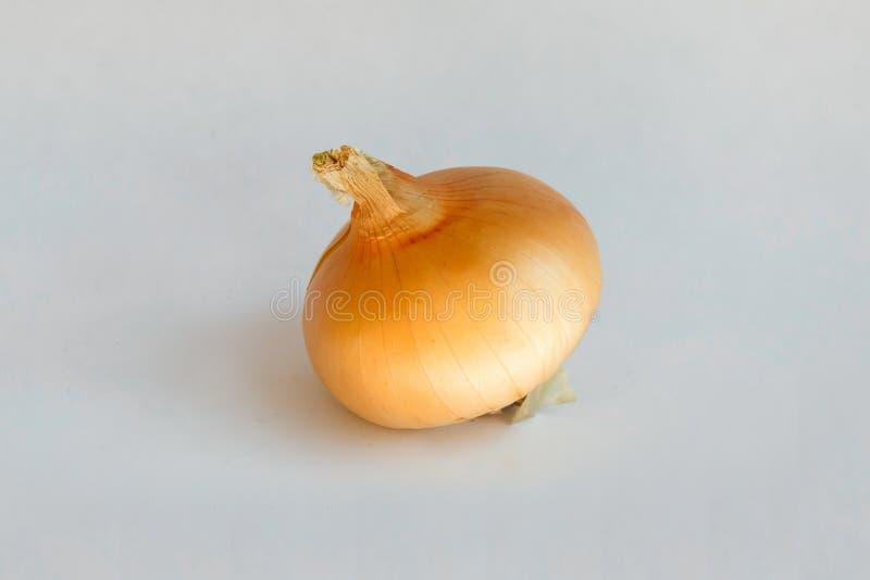 Cebola dourada no close up fotos de stock