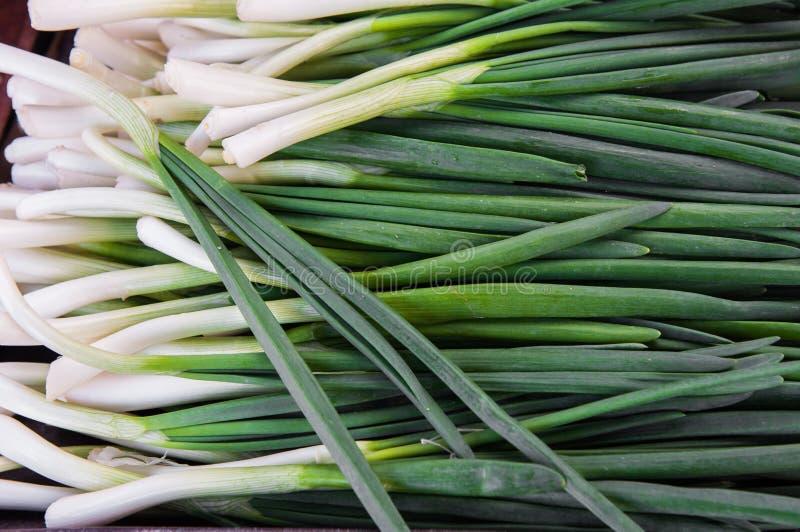 Cebola fresca verde imagem de stock