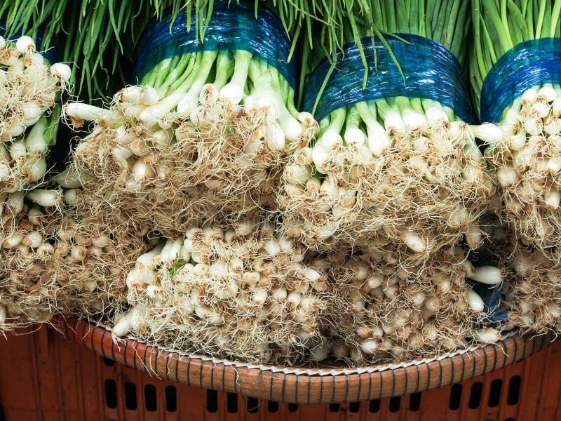 Cebola verde da mola foto de stock royalty free