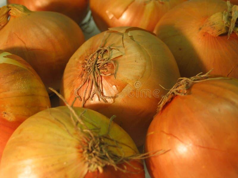 Download Cebolas imagem de stock. Imagem de ingredientes, raiz, planta - 544217
