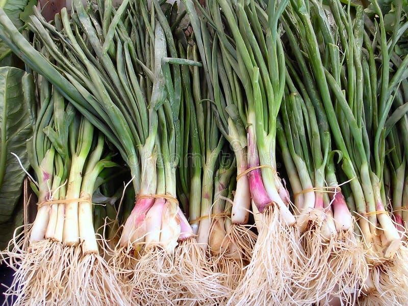 Download Cebolas foto de stock. Imagem de vegetal, edible, cozinheiro - 69538
