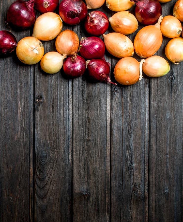 Cebolas frescas vermelhas e amarelas imagem de stock