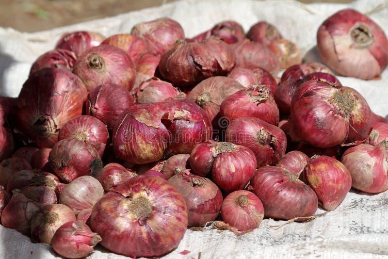 Cebolas no mercado Debark imagens de stock royalty free