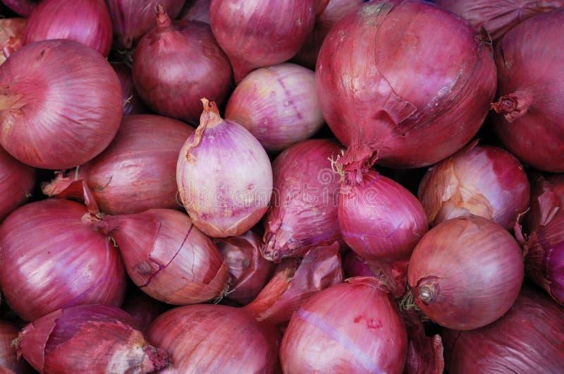 Cebolas orgânicas vermelhas imagens de stock royalty free