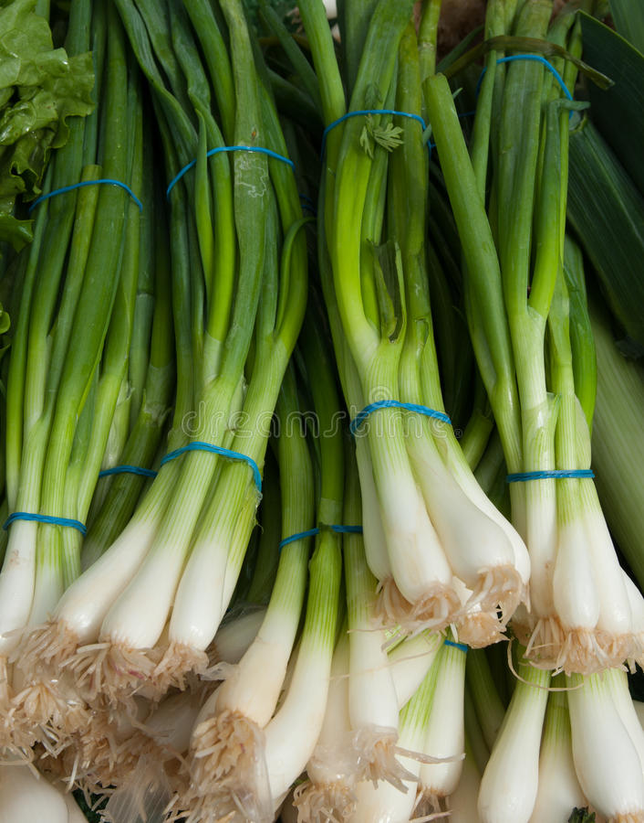 Cebolas verdes orgânicas imagens de stock