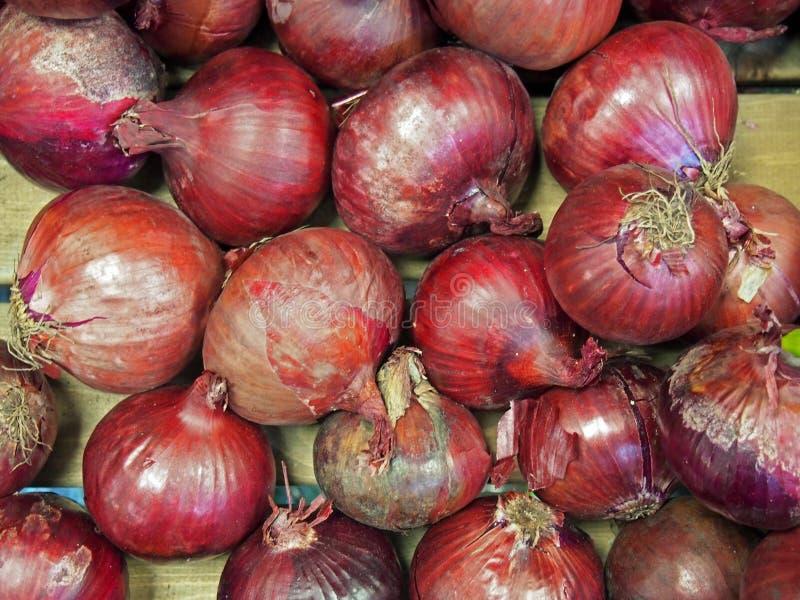 Cebolas vermelhas orgânicas com formas desiguais e peles vermelhas ásperas foto de stock