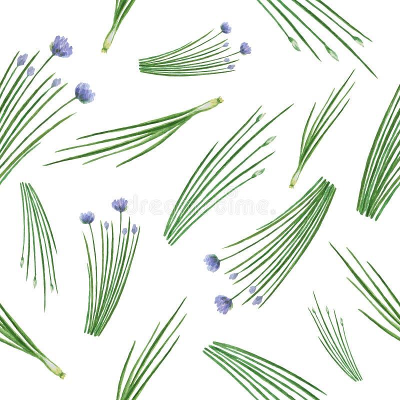 Cebolinha tirado da erva do teste padrão da aquarela mão sem emenda ilustração do vetor