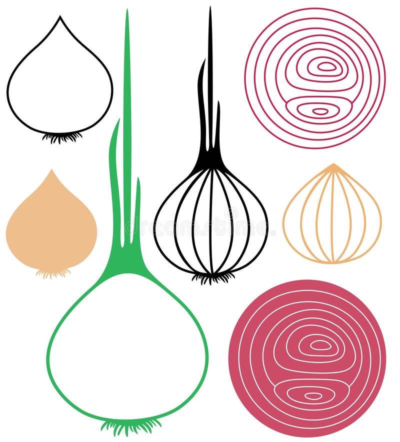 cebolla ilustración del vector