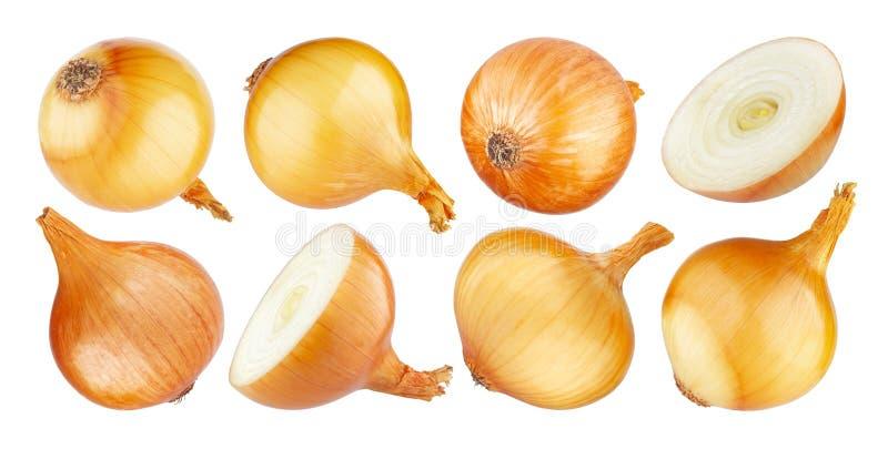 Cebolla aislada, conjunto y mitad de la cebolla madura en el fondo blanco imagenes de archivo