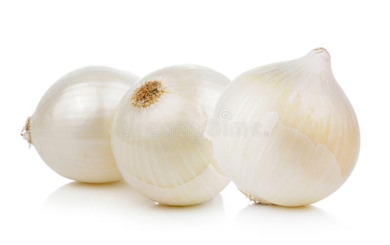 Cebolla blanca fotografía de archivo libre de regalías
