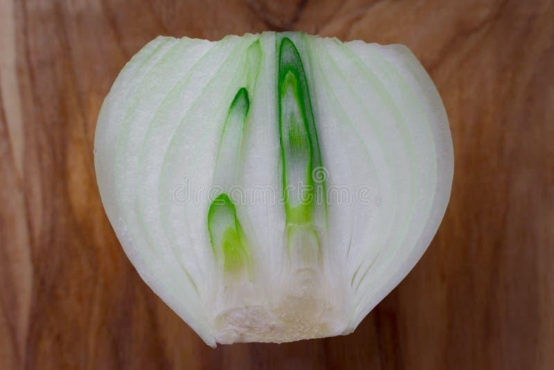 Cebolla blanca brotada madura cortada por la mitad en el fondo de madera fotos de archivo libres de regalías