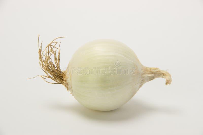 Cebolla blanca madura hermosa en un fondo fotos de archivo libres de regalías