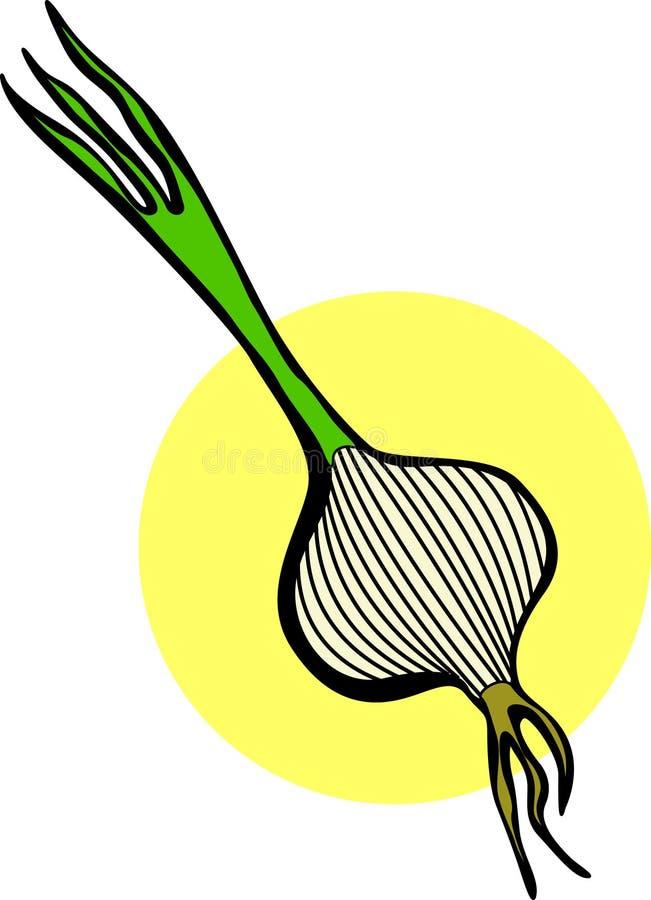 Cebolla con el vástago stock de ilustración