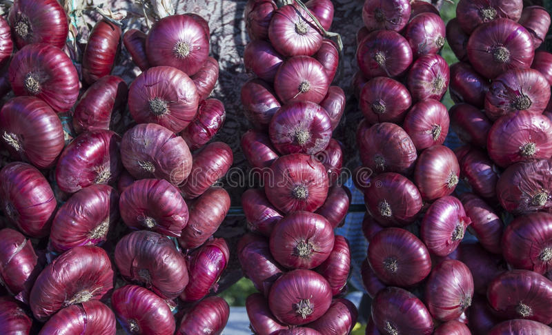 Cebolla crimea roja dulce. imagen de archivo libre de regalías