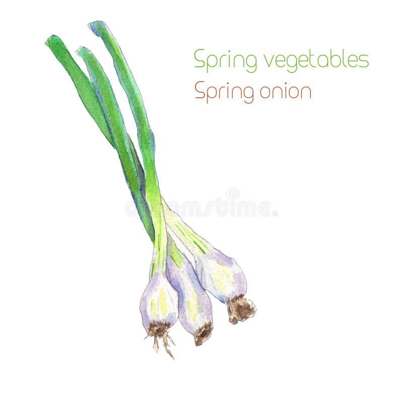 Cebolla de la primavera de la acuarela libre illustration