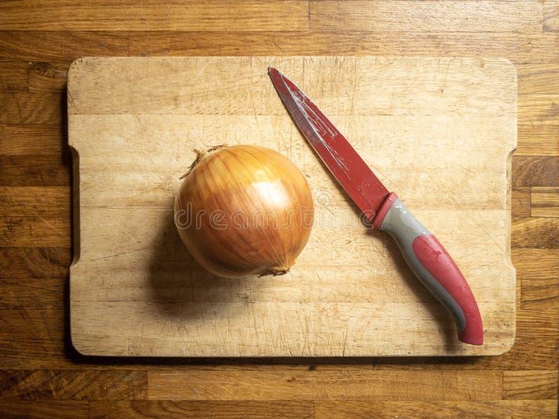 Cebolla de oro lista para ser cocinado fotos de archivo libres de regalías