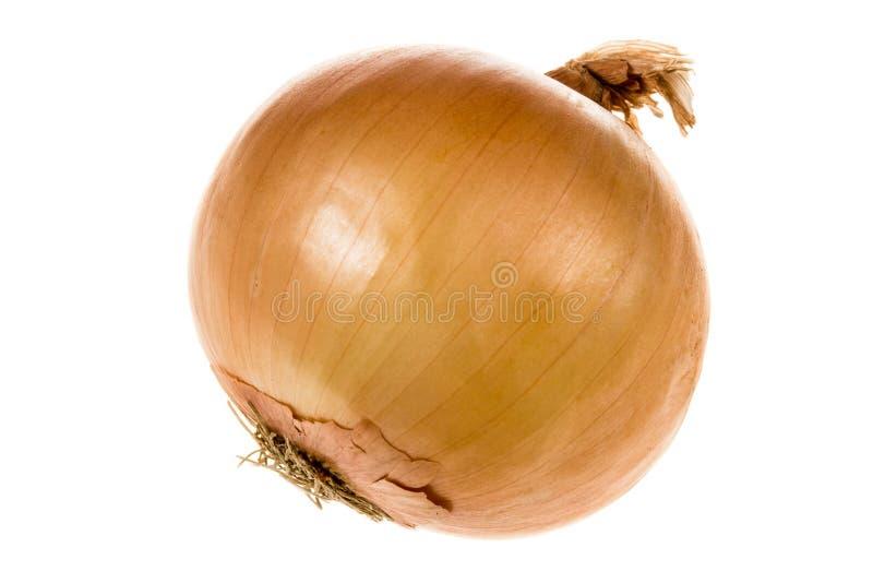 Cebolla madura en un fondo blanco fotografía de archivo