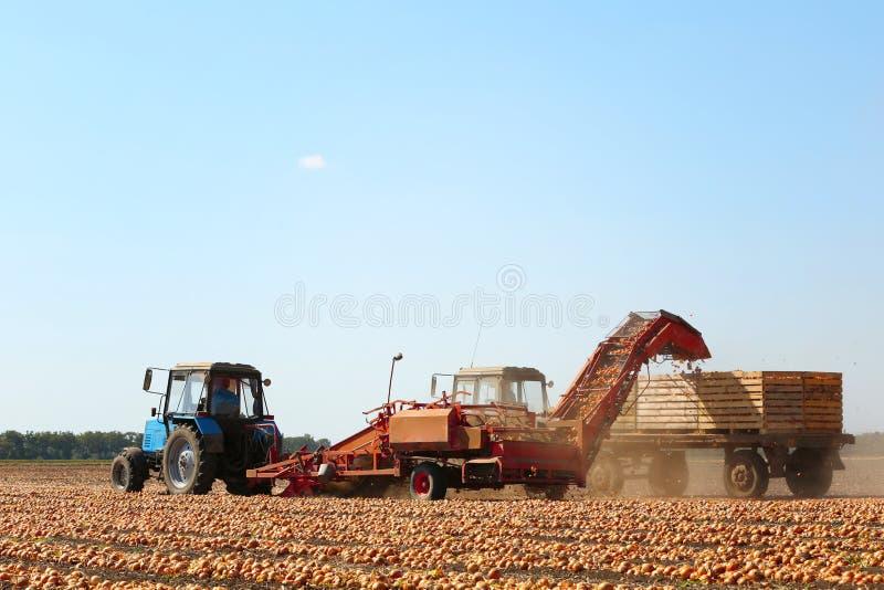 Cebolla que cosecha con el equipo agrícola moderno imagen de archivo