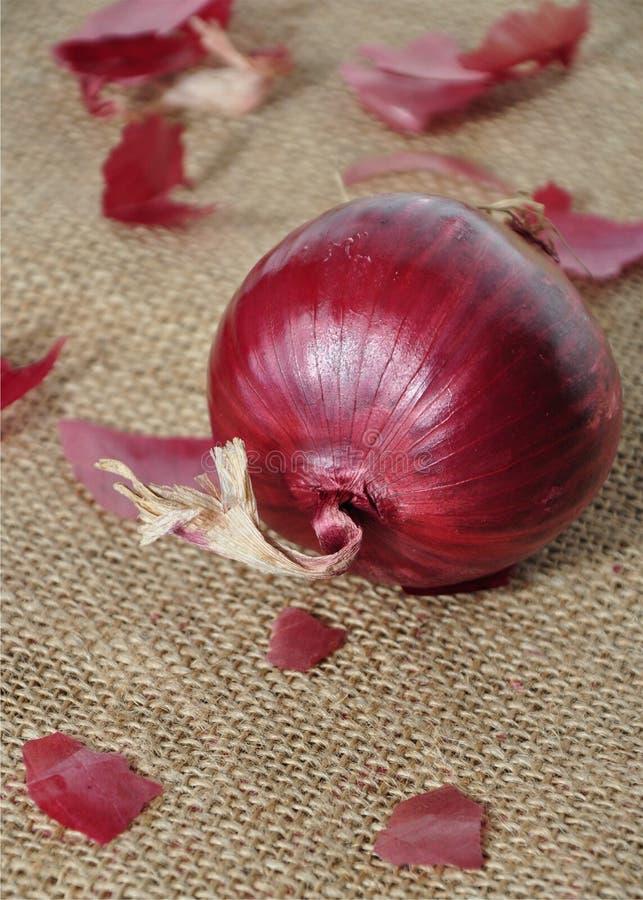 Cebolla roja fotos de archivo