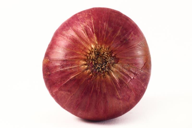 Cebolla roja fotografía de archivo